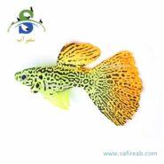 guppy fish decor