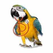بهداشتی و درمانی پرندگان
