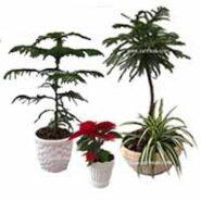 سایر گیاهان