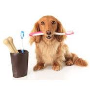 بهداشت دهان و دندان سگ