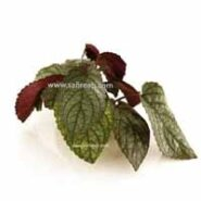 گیاهان آکواریومی ترکیب سبز و قرمز