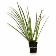 گیاهان آکواریومی ترکیب سبز و سفید